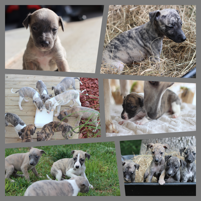 puppy collage.png